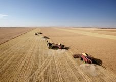 Four Combines in Field royalty free stock image