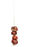 Four conkers on a string Royalty Free Stock Images