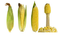 Four corn combination on a white background. Four different form of corn, tells a story Stock Photo