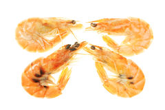 Four crevettes Royalty Free Stock Images