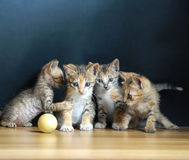 Four cute cats. Playing a ball.one telling the stratagem stock photography