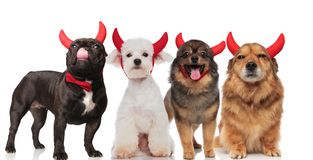 Four cute dogs with red devil horns standing and sitting. On white background, the french bulldog wearing a bowtie Royalty Free Stock Photo