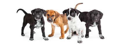 Four Cute Puppies Social Media Banner Royalty Free Stock Photos