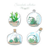 Four decorative compositions with succulents. Set of four floral compositions with succulents and cactuses in decorative glass vases, vector illustration Royalty Free Stock Image