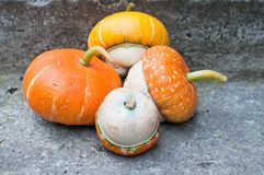 Four decorative pumpkins (Cucurbita pepo) Stock Image