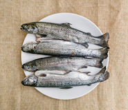 Four delicious grilled trouts, fish specialties. Tasty grilled trout. Food theme. International cuisine. Fish specialties Stock Photos