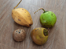 Four different coconuts on table Royalty Free Stock Photos