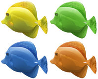 Four different colors of fish. Illustration Royalty Free Stock Image
