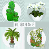 Four different green plants in pots Stock Image