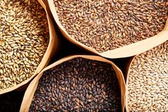 Four different kinds of barley malt in canvas bags, stock photography
