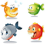 Four different kinds of fishes with big fangs. Illustration of the four different kinds of fishes with big fangs on a white background Royalty Free Stock Images