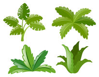 Four different kinds of plants Stock Images