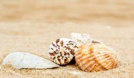 Four different bright sea shells on yellow quartz sand stock photo