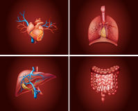 Four different parts of human organs. Illustration Royalty Free Stock Photos