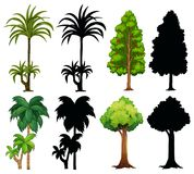 Four different plants with silhouette Royalty Free Stock Image