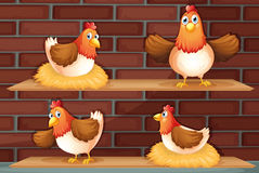 Four different positions of a chicken Royalty Free Stock Photography