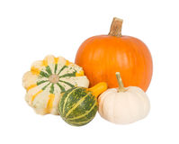 Four different pumpkins Royalty Free Stock Photos
