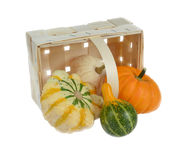 Four different small pumpkins Royalty Free Stock Image