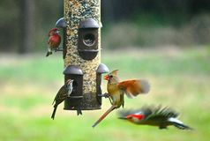 Four different species of birds at feeder stock photos