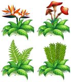 Four different types of plants on white background. Illustration Stock Photography