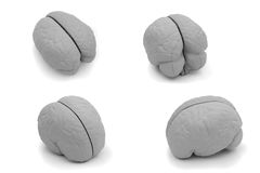 Four different view of a model brain Royalty Free Stock Image