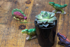 Four dinosaurs and Succulents Royalty Free Stock Images