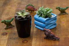 Four dinosaurs and Succulents Royalty Free Stock Image