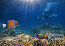 Four divers among fish. And corals Royalty Free Stock Photos