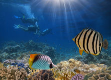 Four divers among fish. And corals. Red Sea Stock Photo
