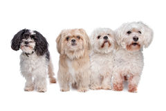 Four dogs Stock Photos