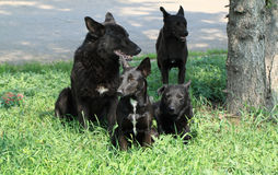 Four dogs of black painting Royalty Free Stock Image