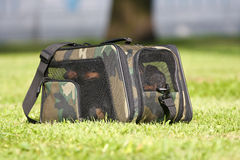 Four dogs in a carrying bag Royalty Free Stock Images