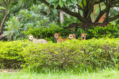 Four dogs in the park Royalty Free Stock Photography