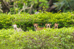 Four dogs in the park Royalty Free Stock Photos