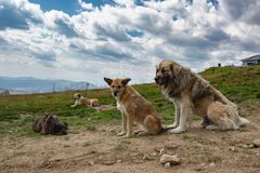 Four dogs sitting in nature. Four dogs sitting and relaxing in nature with cloudy sky Stock Photo