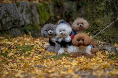Four dogs in beautiful nature royalty free stock photos