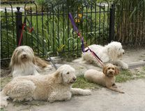 Four dogs waiting outside Royalty Free Stock Photos