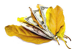 Four Dollar Bills Between Autumn Leaves Stock Photo