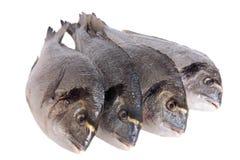 Four dorado fish isolated on white Stock Photo