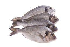 Four dorado fish isolated on white. Background Royalty Free Stock Photo