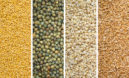 Four Dried Grains Stock Photos