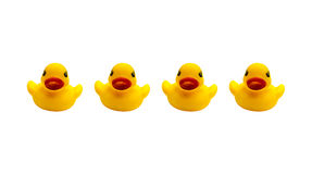 Four ducks rubber on a white background Royalty Free Stock Image