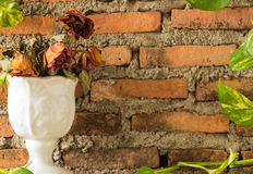 Four dying rose. In white vase with devil's ivy and brick wall. ( Use cloudy white Balance for mood warmth Stock Photo