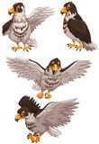 Four eagles in different poses Royalty Free Stock Photos