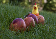 Four Easter coloured eggs on the grass with a fake chicken Royalty Free Stock Image
