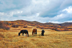 The four eating horses on the grassland Royalty Free Stock Photo