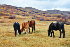 The four eating horses on the hillside Royalty Free Stock Image