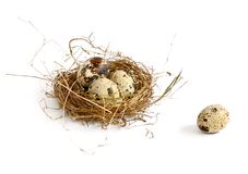 Four eggs. In nest on white Stock Images