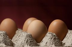 Four eggs in an egg tray. Four large eggs in a textured cardboard egg tray with a dark red background Stock Photography