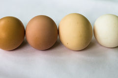 Four eggs on a light background Royalty Free Stock Photography